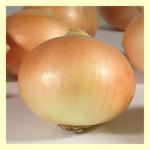 a-16 soğan tohumu img