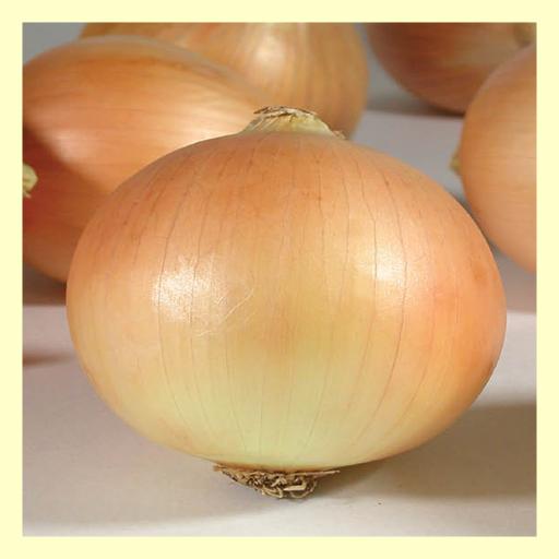a16 turkish onion seeds