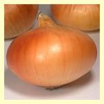ws88 uzun gün soğan tohumu img