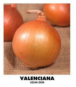 sogan_valencia